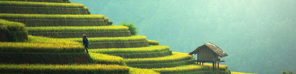 Agriculture Plateau Chine