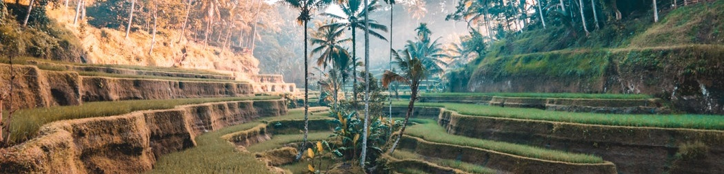 Riziculture Tegallang Indonésie